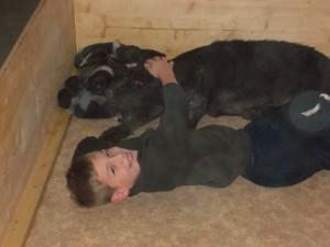Matthias bei den Hunden